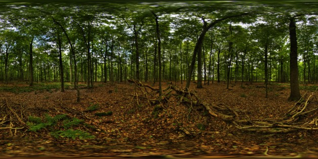 Waldplanet